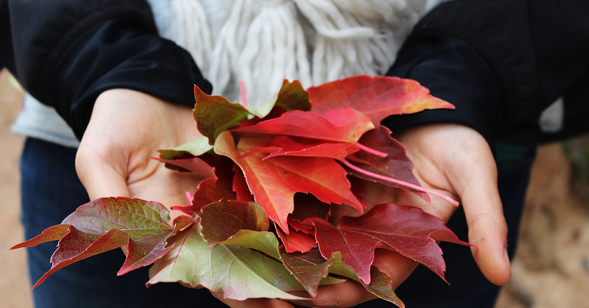 Woman in sweater holding autumn leaves