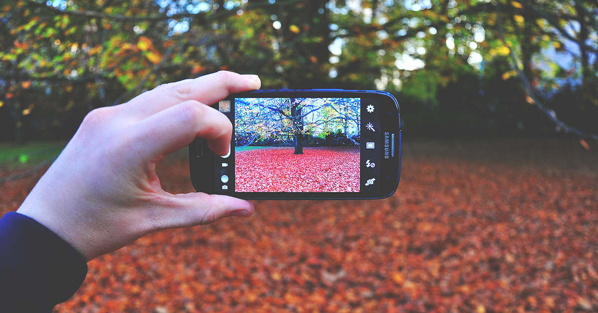 Person photographing tree with a smartphone