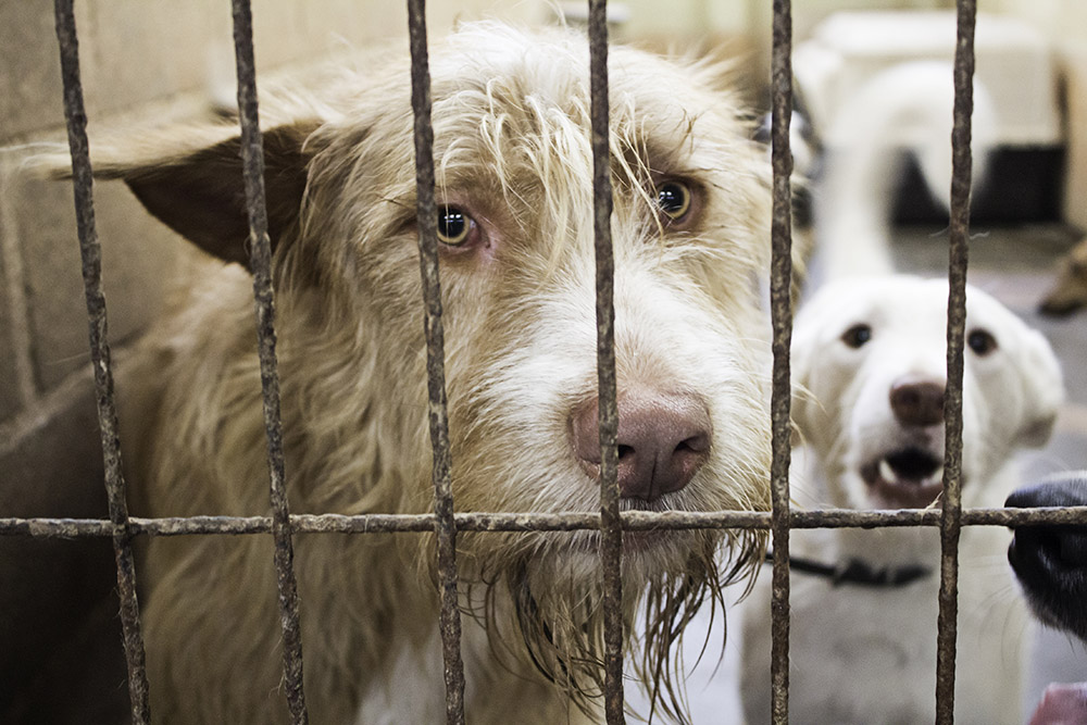 Fundraise for your Animal Rescue on Mightycause