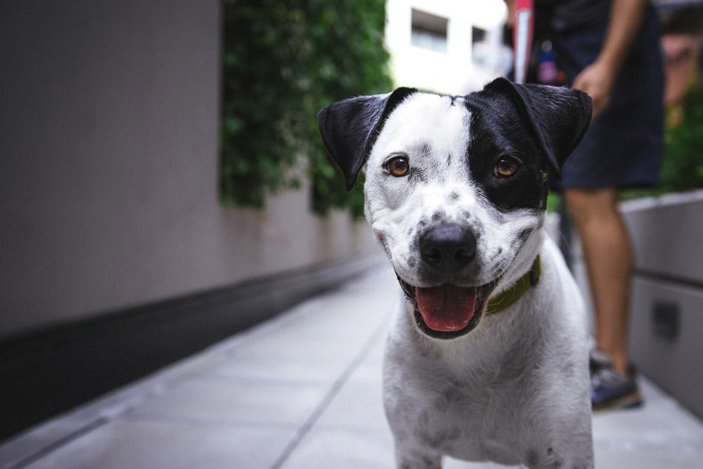 Animal Rescue Fundraising on Mightycause
