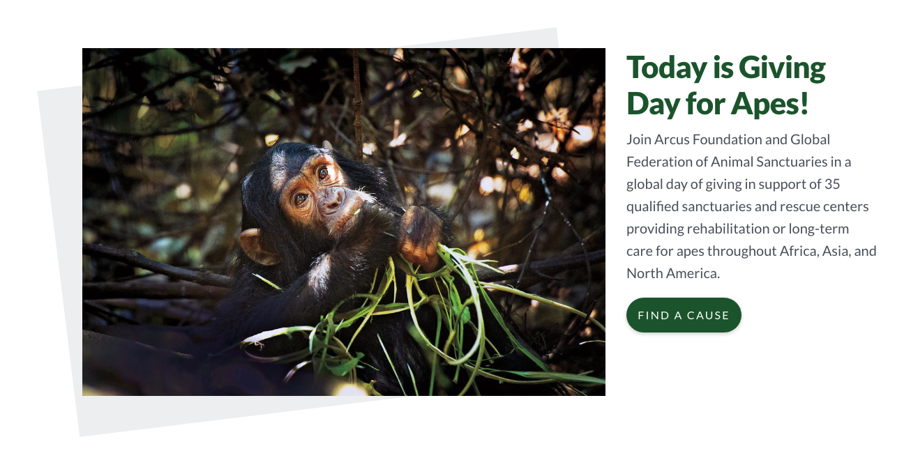Screenshot of Giving Day for Apes site