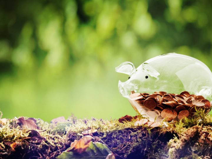 Panorama banner of a cute green piggy bank in nature on a moss covered ledge with ferns in a forest or woodland with copy space in a savings, financial or donation concept