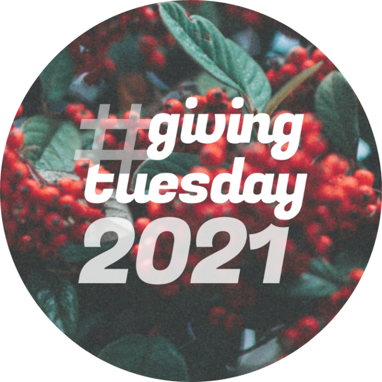 giving tuesday logo on background with holly berries