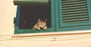 recurring giving: cat in window