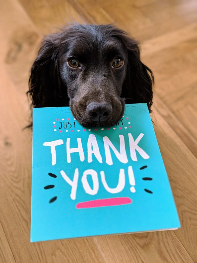 how to say thank you to donors: image of a black dog holding a thank you card in its mouth
